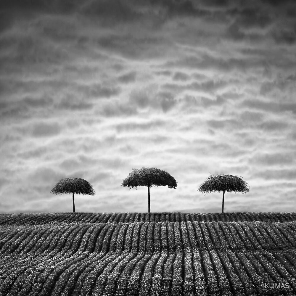 Three sisters by KLIMAS