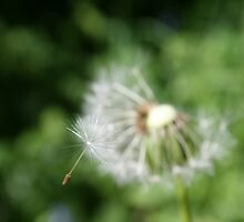 the flying dandelion seed by MeganP