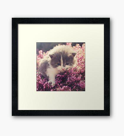Blue Eyed Kitty Framed Print