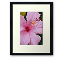 Pink Hibiscus Flower Framed Print