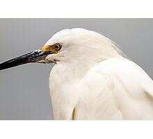 Snowy Egret Profile Photographic Print