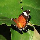 butterfly in green by Peta Hurley-Hill