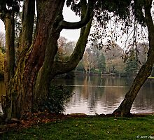 Longton Park Tree by David J Knight