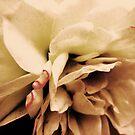 Vintage Rose by Suzanne German