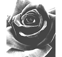 Grainy Rose Photographic Print