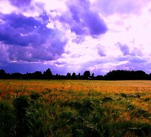 Barley and Blue by charlylou