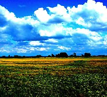 Fields and Clouds - Seaton Ross by charlylou
