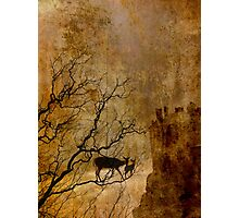 Deer Crossing the Sea  Photographic Print