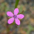 Wildflower Up Close by Annie Underwood