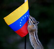 Jasper Recruits a New Volunteer for His Work in Venezuela by Betsy  Seeton