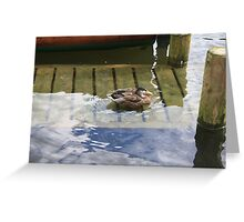 Duck in the Windermere  Greeting Card