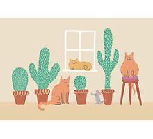 Cats Love Cacti Photographic Print