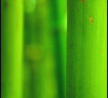 Bamboo by qishiwen