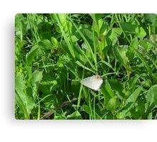 View larger - Antennae Front and Back? Canvas Print