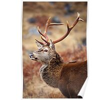 Red Deer Stag in the Highlands. Poster