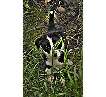 Puppy Misha Photographic Print