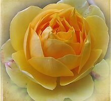 ~ Yellow Dream ~ by Brenda Boisvert