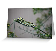 Swallowtail Caterpillar in Kansas Greeting Card