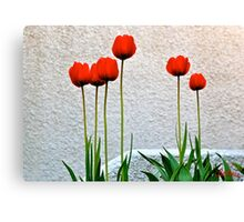 Tulips. Canvas Print