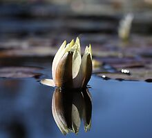 Lotus in a fountain by Sarah Vilar