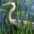 Fishing In The Grass by Deborah  Benoit