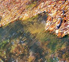 Monet's Mirror by AsEyeSee
