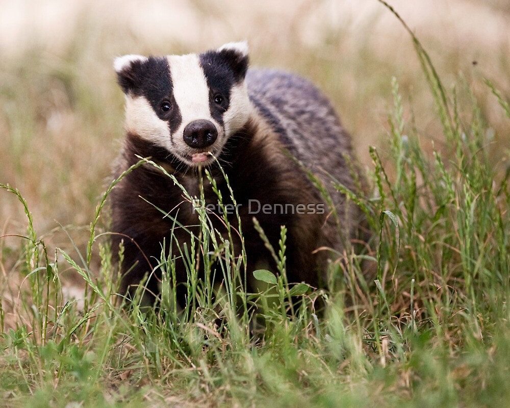 The Happy Badger by Peter Denness