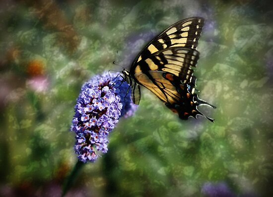 First Butterfly by Sandy Keeton