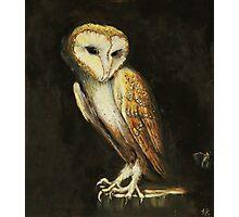 Barn Owl (Tyto alba) Photographic Print