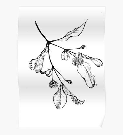 Blossoms (Austromyrtus) Poster