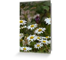 Depth of Daisies Greeting Card