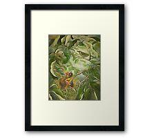 Lewin's honeyeater and nestlings (Meliphaga lewinii) Framed Print