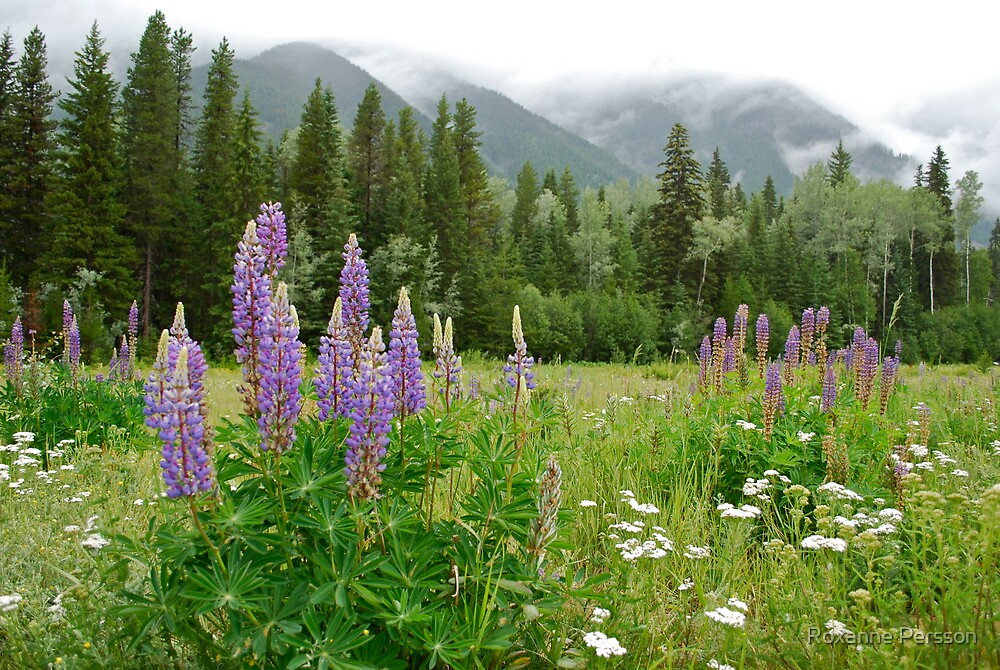 Lupines - Wildflower Meadow at Mt. Robson by Roxanne Persson