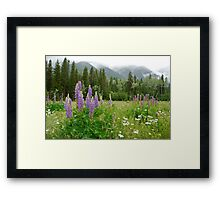 Lupines - Wildflower Meadow at Mt. Robson Framed Print