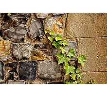 Flint and ivy Photographic Print