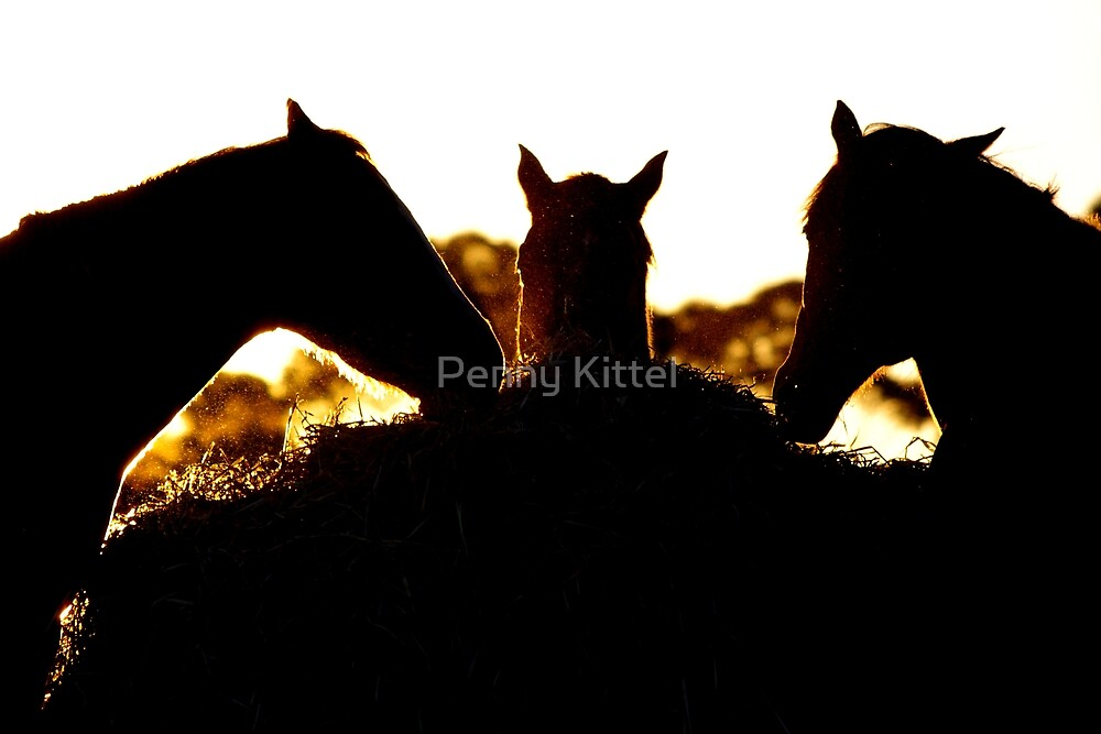 Dinner for three.. by Penny Kittel