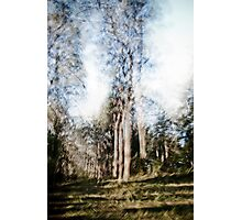 Multiple of one Photographic Print