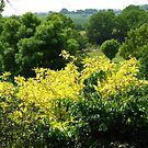 Bushes with Yellow Leaves - Hyde Hall by BlueMoonRose