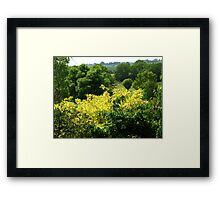 Bushes with Yellow Leaves - Hyde Hall Framed Print