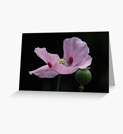 Pink Poppy and Pod Greeting Card