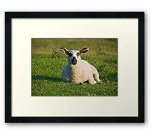 Sheep In Derbyshire Framed Print