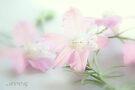 Pretty pink by aMOONy