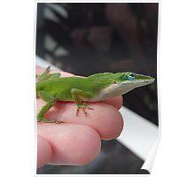 Green Anole lizard Poster