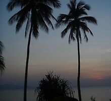 Palm Trees - Thailand by Robert Houghton