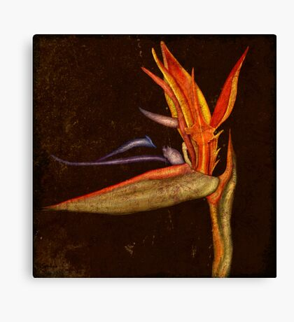 Botanica - Bird of Paradise Canvas Print