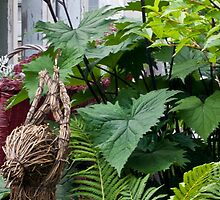 Large Leaf Ligularia And Ferns  by Sandra Foster