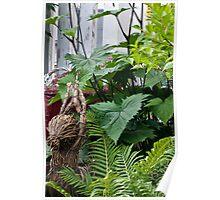 Large Leaf Ligularia And Ferns  Poster