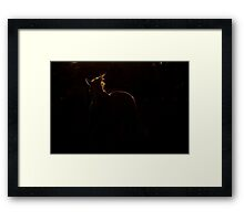Prancing with light.. Framed Print