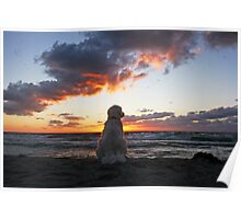 Ditte - the sunset dog Poster