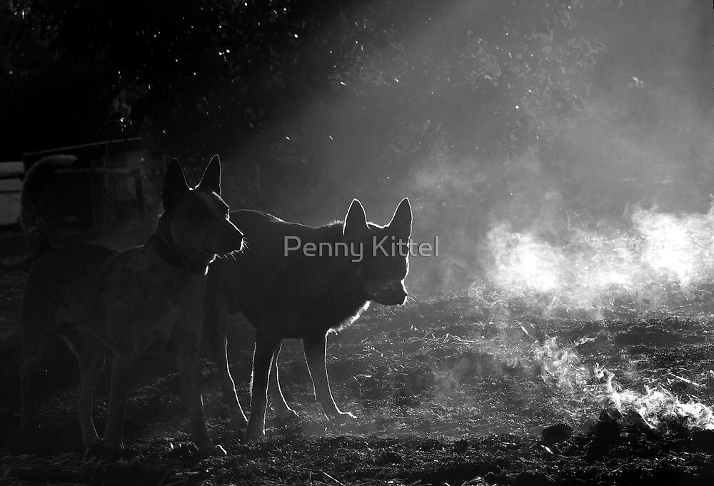 Ghost hounds.. by Penny Kittel